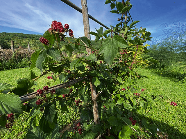 jardin-46