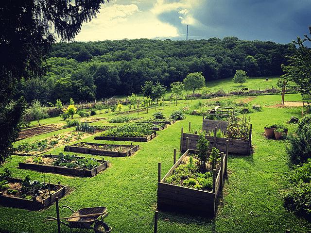 jardin-potager-martel-46