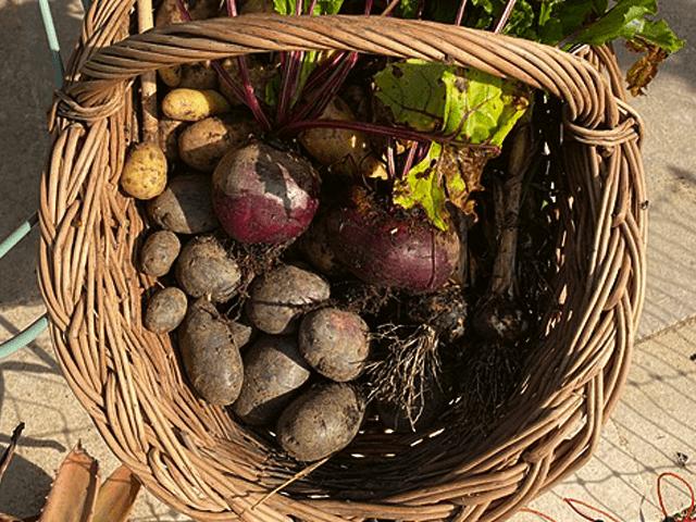 potager-martel