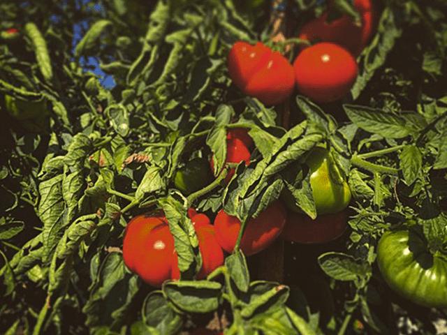 potager-permaculture-46-martel
