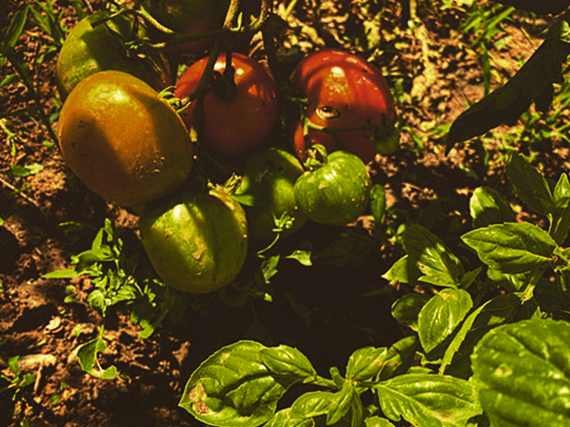 potager-permaculture-martel